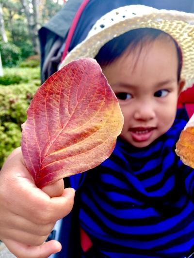成田山の紅葉ニシキギ