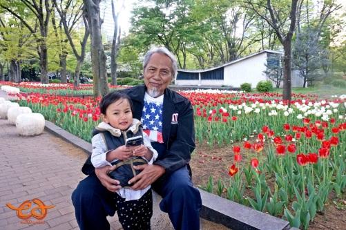 tulips in Hibiya Park Tokyo